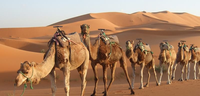 3 days Tour to  Merzouga